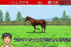 Derby Stallion Advance