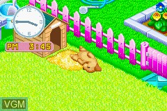 In-game screen of the game Nakayoshi Pet Advance Series 2 - Kawaii Koinu on Nintendo GameBoy Advance