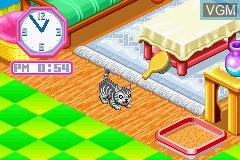 In-game screen of the game Nakayoshi Pet Advance Series 3 - Kawaii Koneko on Nintendo GameBoy Advance