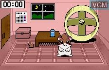 Dokodemo Hamster 3 - O Dekake Saffron